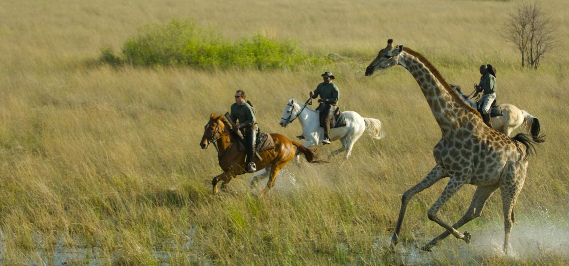 Yo Safaris..